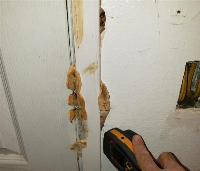 Mold Mushrooms coming out of the door casing.